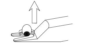 Hebe die Zecke vorsichtig mit dem Zeckenstick an